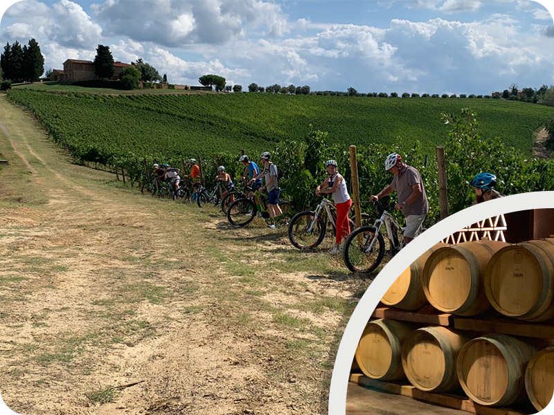 "Tuscany bike wine tour ""Castelfalfi winery experience"""
